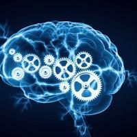 Keep an Active and Healthy Brain