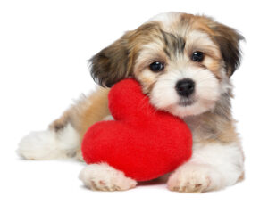 "February 20th Is ""Love Your Pet"" Day"